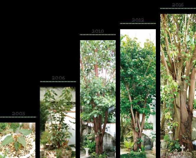 菩提樹の記録